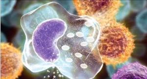 malattie-autoimmuni